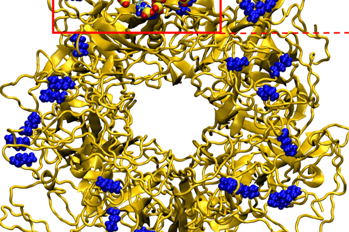 Amolecular dynamics model showing an antiviral nanoparticle binding to the outer envelope of the human papillomavirus