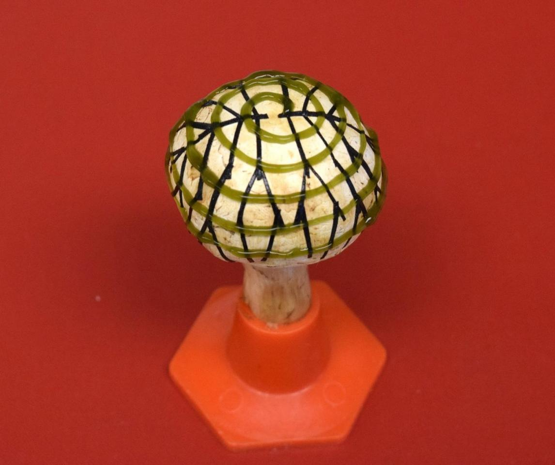 An electrode network (branched pattern) and cyanobacteria (spiral pattern) were 3D-printed onto the mushroom