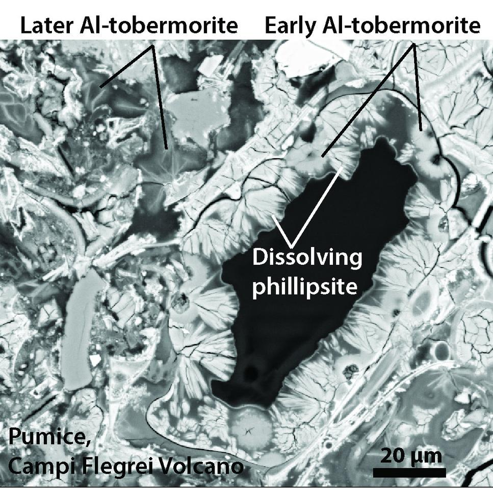 This scanning electron microscope image shows how Al-tobermorite crystals form in volcanic ash, using a similar principle to how the Roman concrete gets its added strength