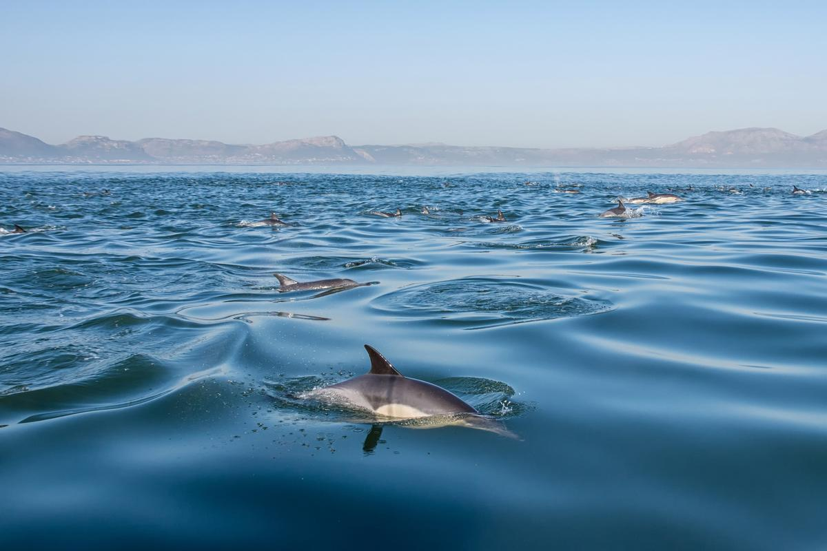Dolphins that inhabit coastal areas can be susceptible to a condition known as freshwater skin disease, and a new study has found climate change to be an important factor