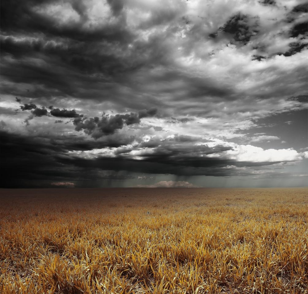 We knew the distinctive smell of rain on dry earth was the result of a chemical released by bacteria, but new research helps explain why the bacteria evolved to do this