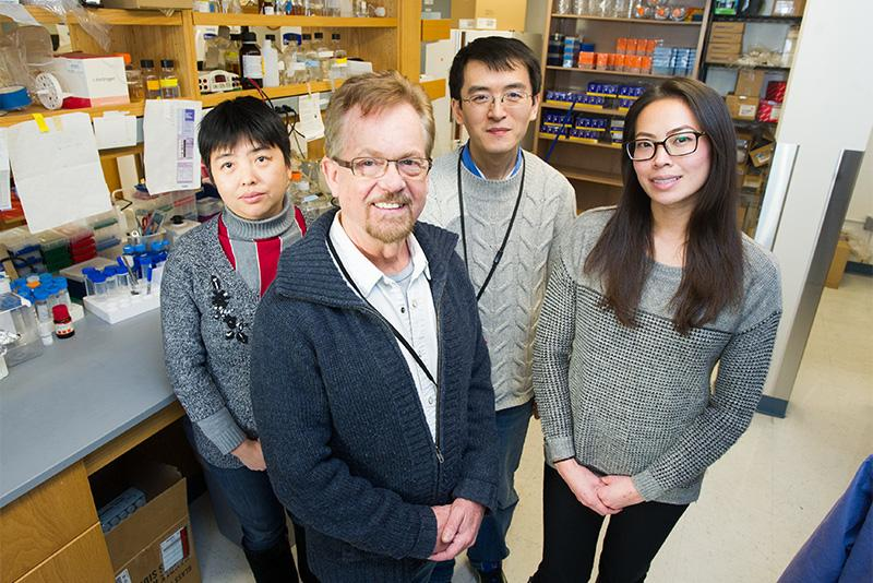 The Boston University researchers, Hong Wang, Stephen Farmer, Libin Liu and Jean Lin