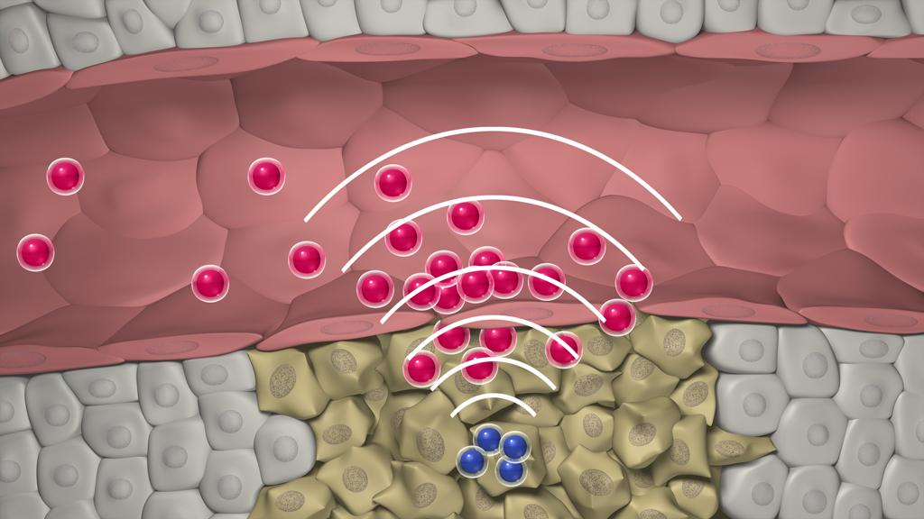 Newly designed nanoparticles can quickly locate a tumor, then set off a chemical reaction that attracts larger swarms of drug-delivering nanoparticles to the site (Image: Gary Carlson)