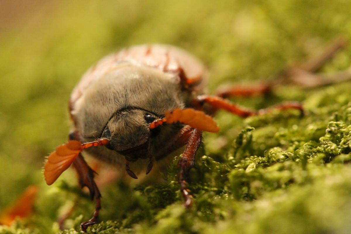 Winner of the youth, under 12 category. Who Says Bugs Aren't Cute? Borrowdale, Cumbria
