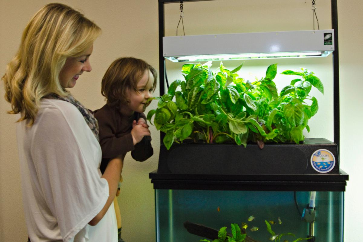 The ECO-Cycle Aquaponics Kit lets users raise plants and filter their aquarium's water at the same time