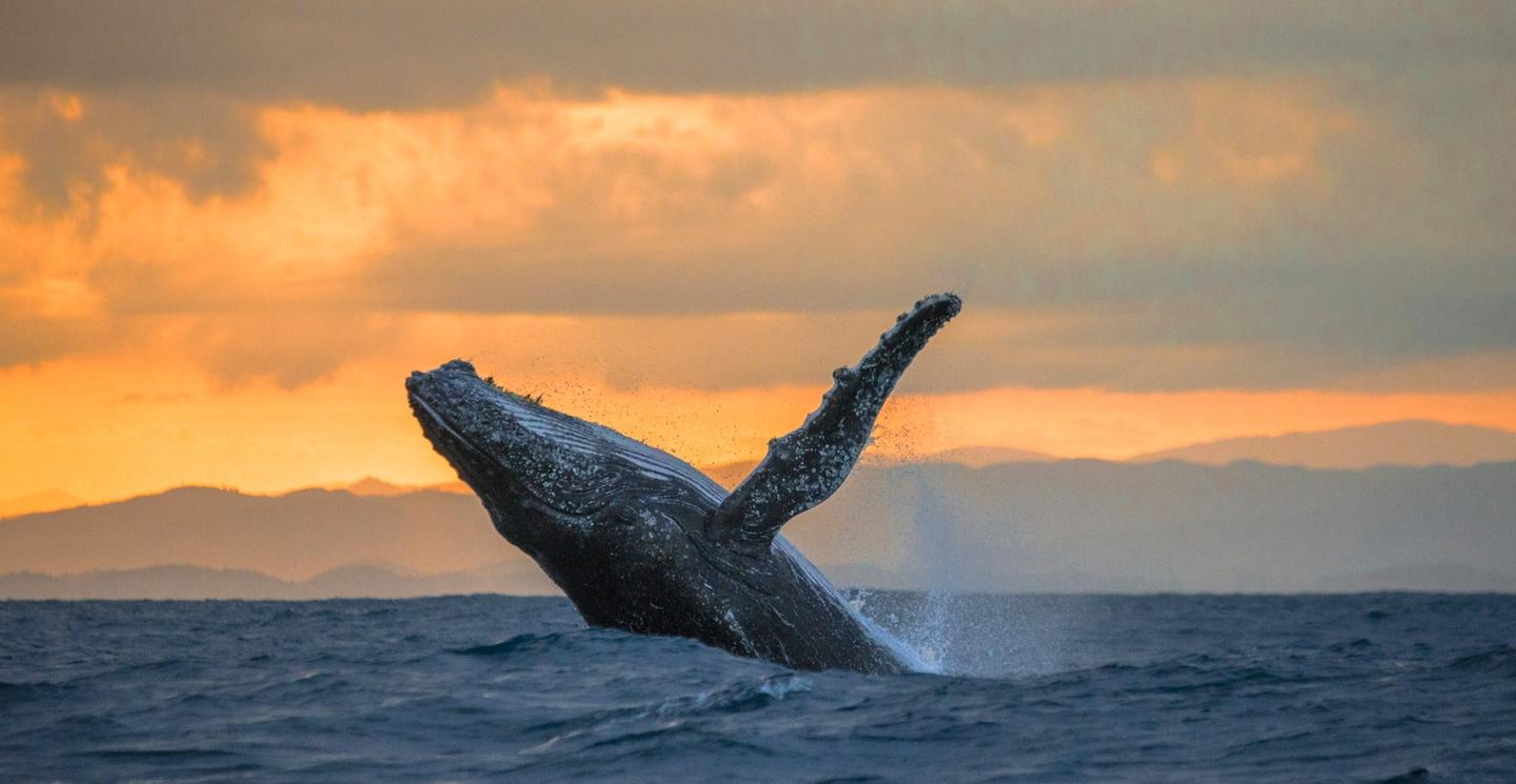 Bycatch and entanglement are serious threats to marine mammals, including humpback whales