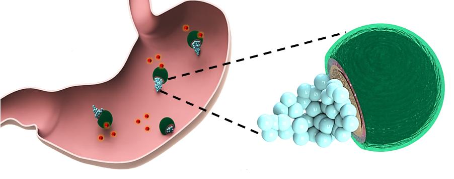 The micromotors keep drugs protected until the stomach environment is altered sufficiently for their safe release