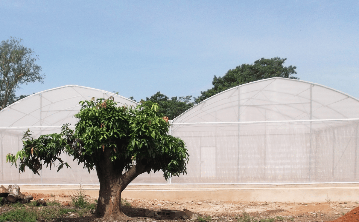 MosquitoSphere, a roughly 6,550-sq-ft, screened-in structure in Burkina Faso, West Africa, was designed to simulate a village setting and included plants, huts, small pools of water and a food source for mosquitoes