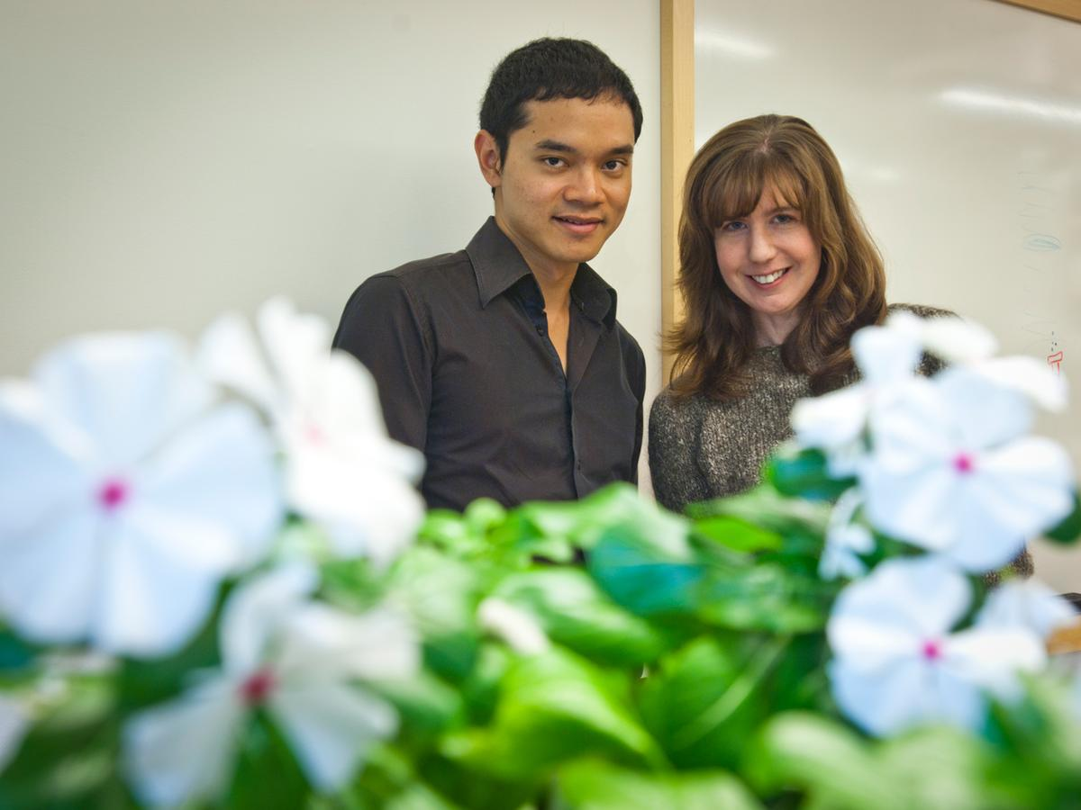 MIT associate professor Sarah O'Connor, right, and graduate student Weerawat Runguphan have engineered periwinkle root cells that can produce variations of compounds that the plant normally synthesizes (Image: Patrick Gillooly)
