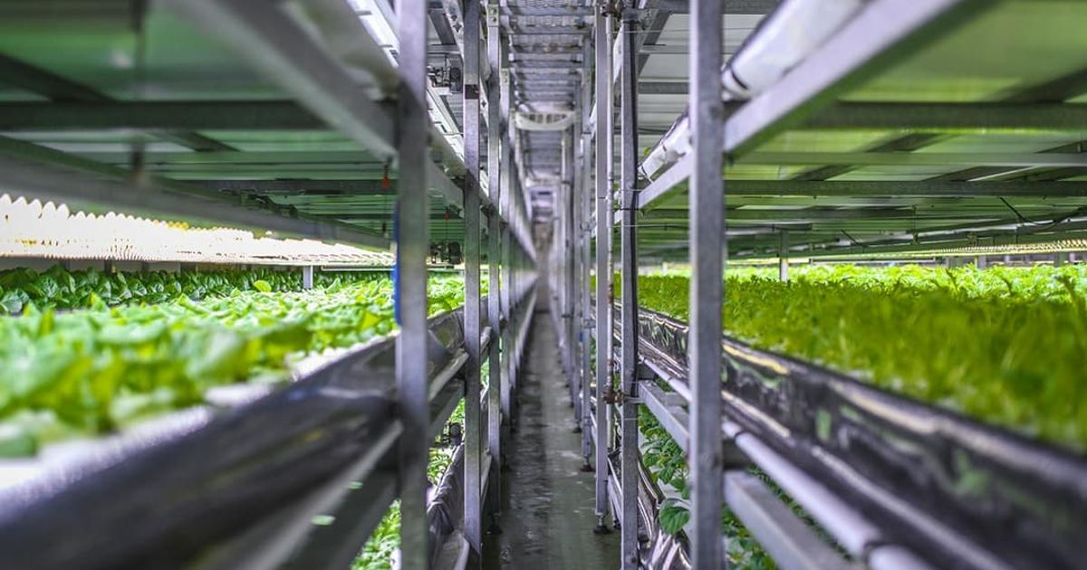 Future food: Vertical farms, self-watering soil, and autonomous tractors