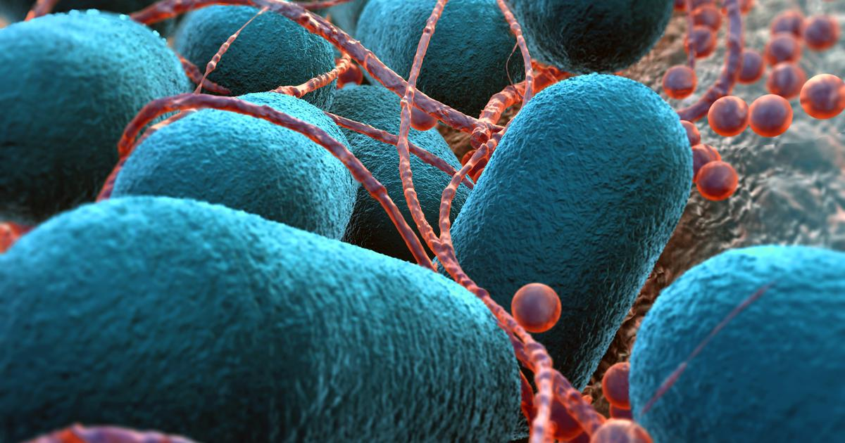 Directed evolution teaches bacteria to eat carbon dioxide