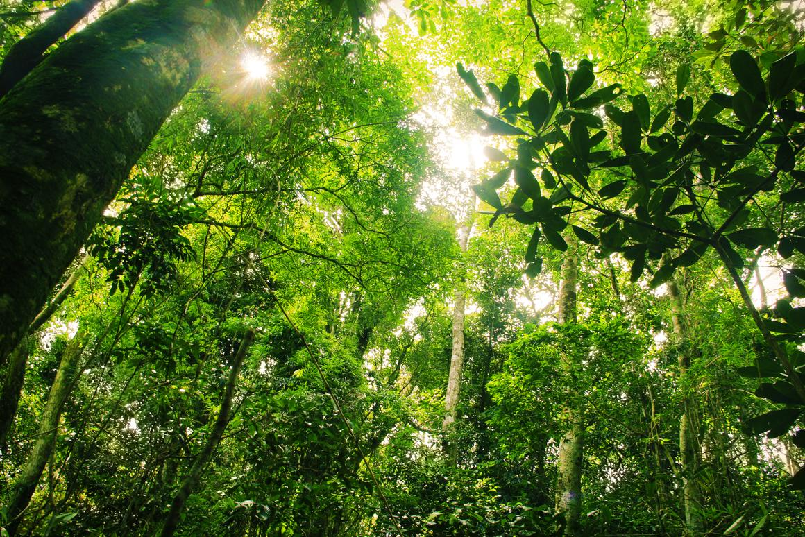Ecosystems like this Brazilian ranforest are feeling the effects of human development