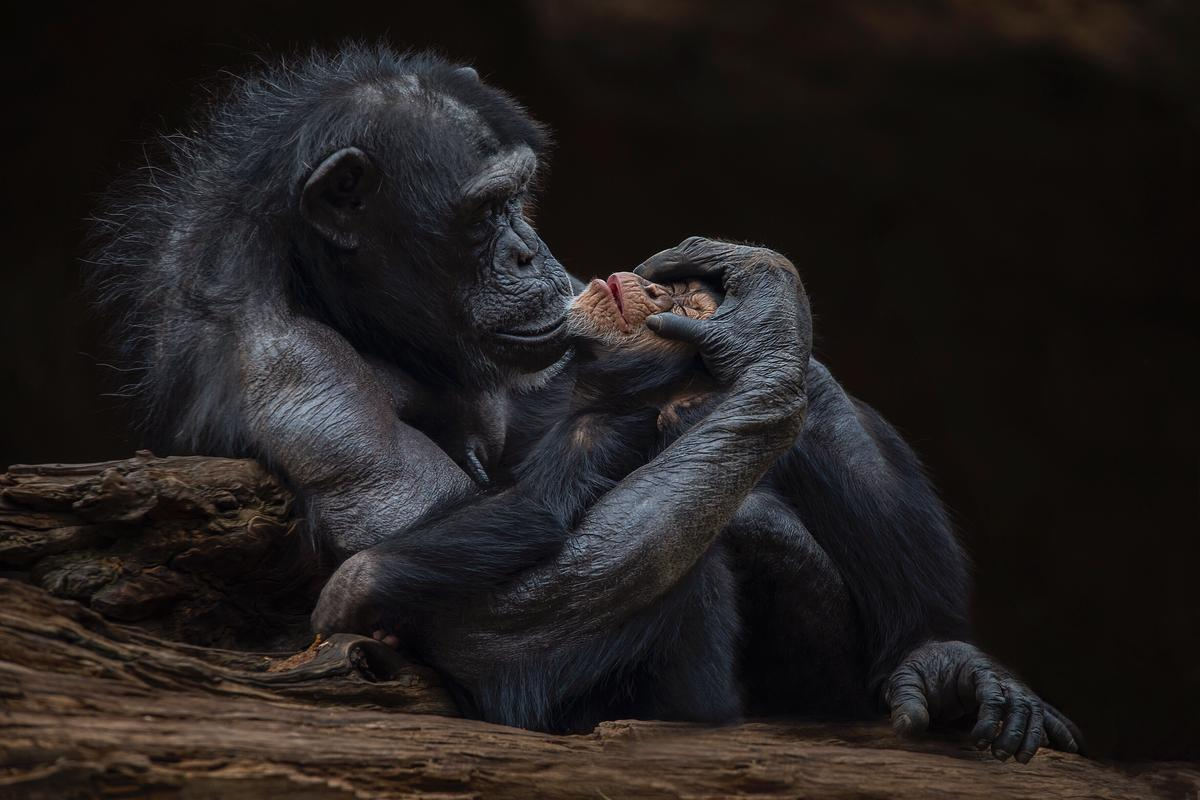 """""""Motherly love"""" captured at the Tenerife zoo"""