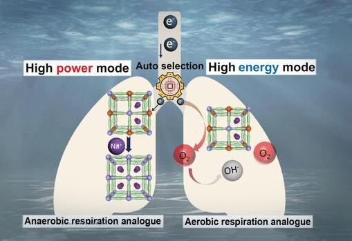 The autonomous power-switching generator is analogous to the anaerobic/aerobic respiratory systems employed by some marine organisms