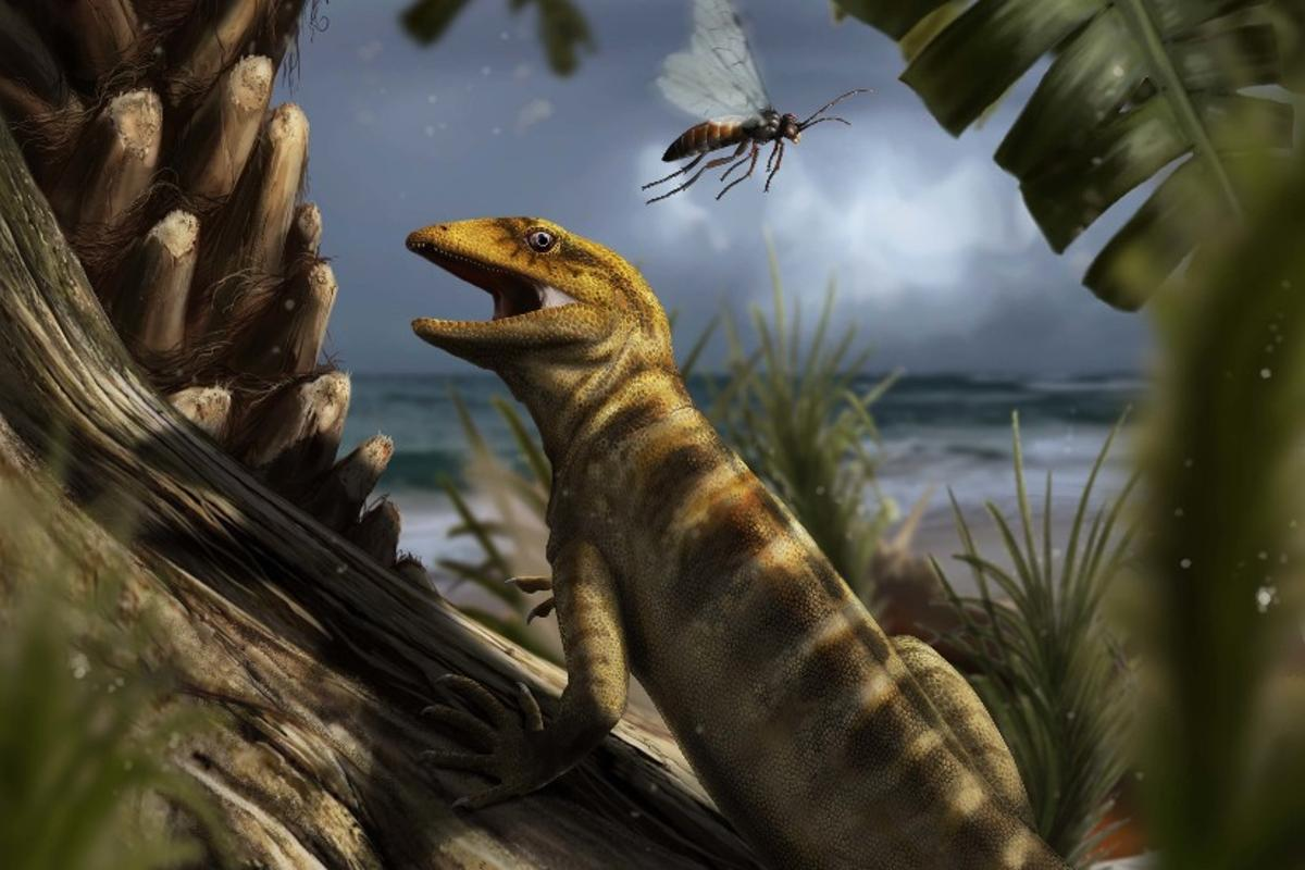 Recreation of life in the Dolomites 240 million years ago, with the oldest lizard known to manMegachirella wachtleri, going about its business