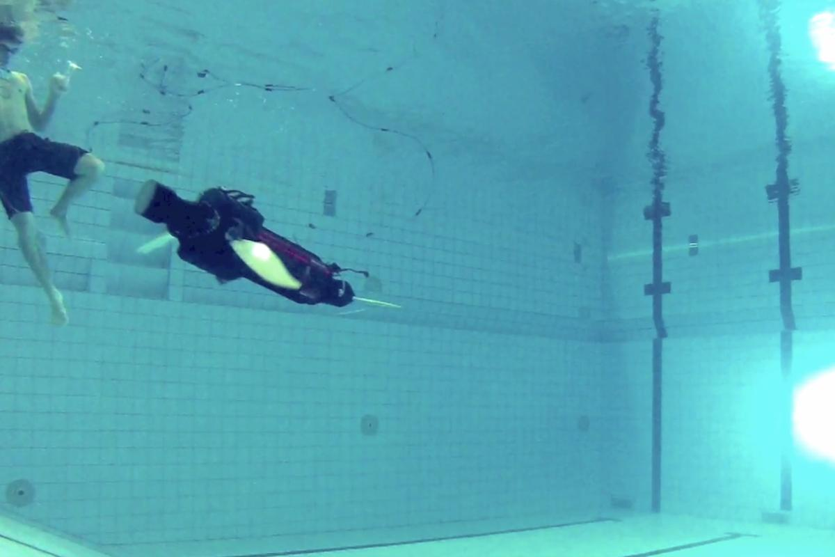 A robot sea turtle built to explore fin-based propulsion takes its first dip in the pool