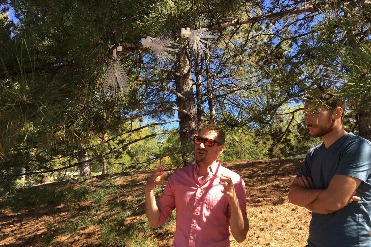 Study authors Peter Lippert (left) and Grant Rea-Downing with their artificial pine branches, during testing for low-cost passive air quality monitors