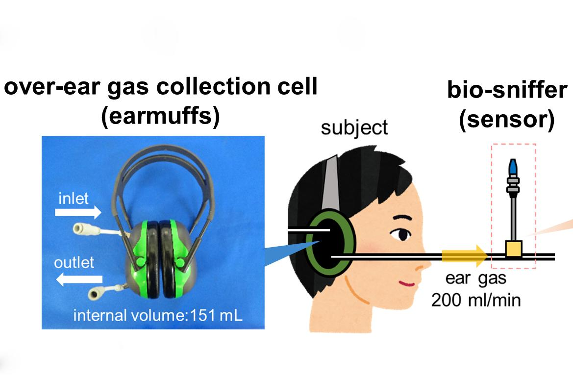 A diagram of the earmuff-based ethanol gas measurement system