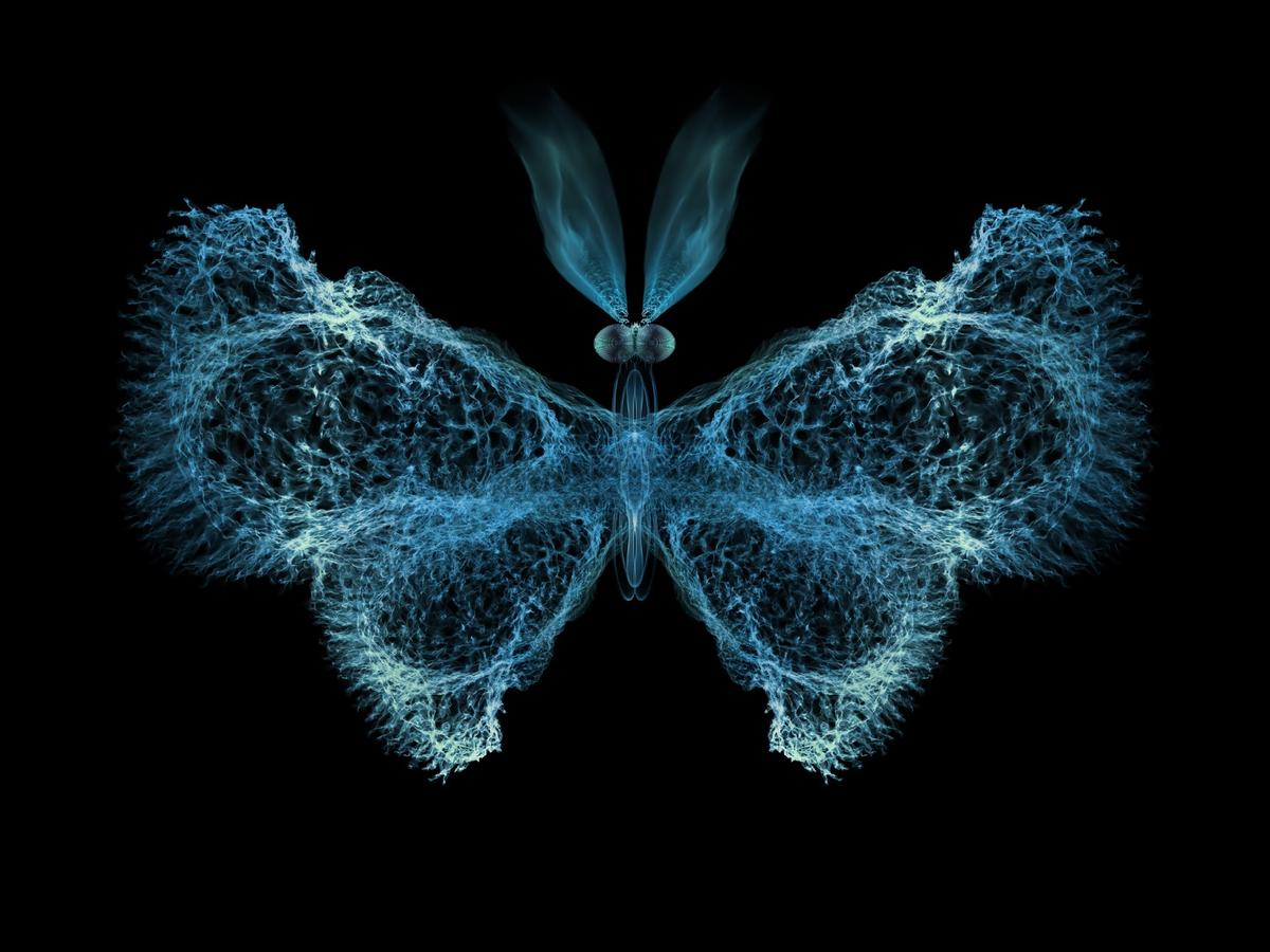 """Researchers have found evidence that chaos theory – best known through the """"butterfly effect"""" – plays a big role in the immune system"""