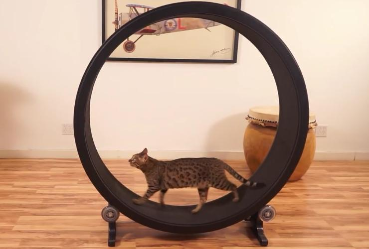 One Fast Cat is designed primarily for house cats at risk of getting bored or developing weight problems