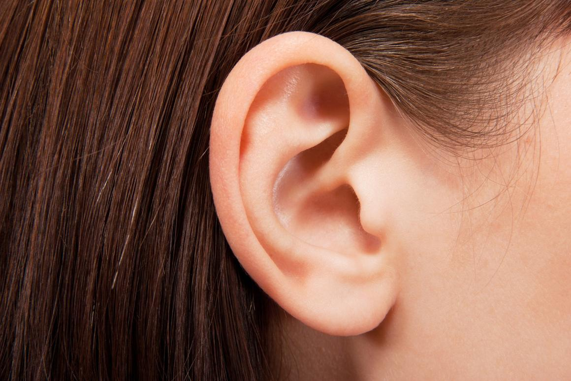Discovery of new neurons in the ear could lead to treatments