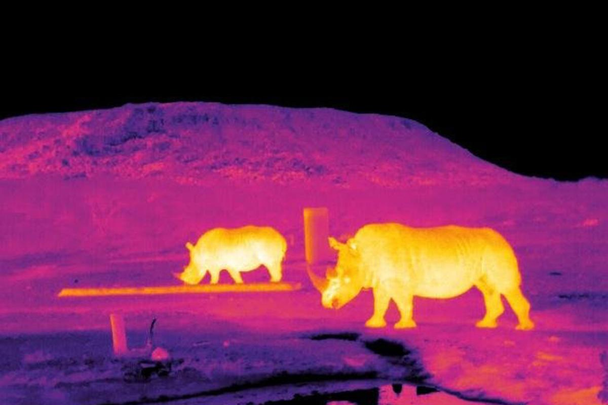 Infrared images of rhinos captured in field trialsin South Africaof a new drone-based system
