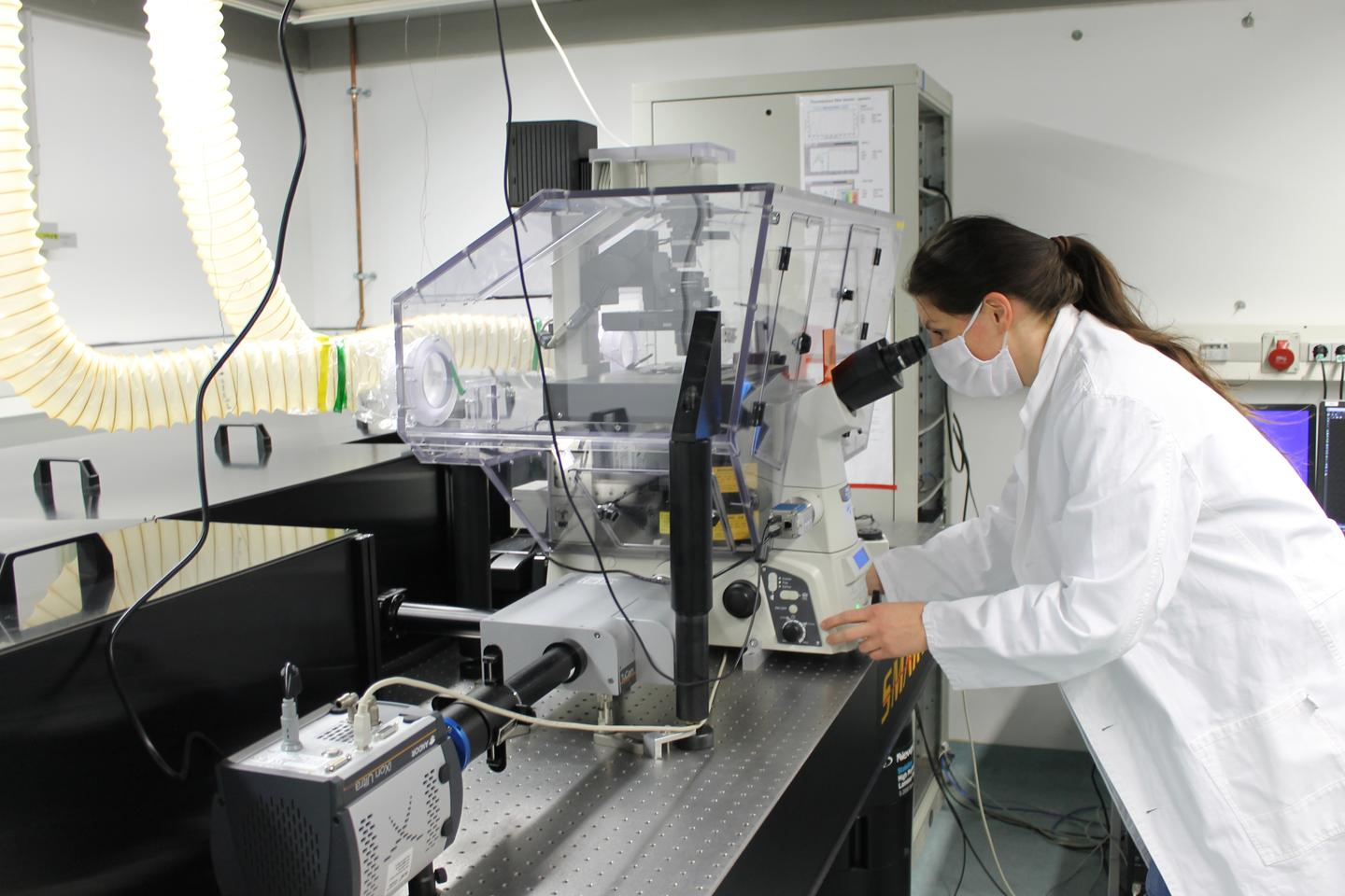 Anja Ramsperger investigates                         plastic uptake by living cells under the                         microscope