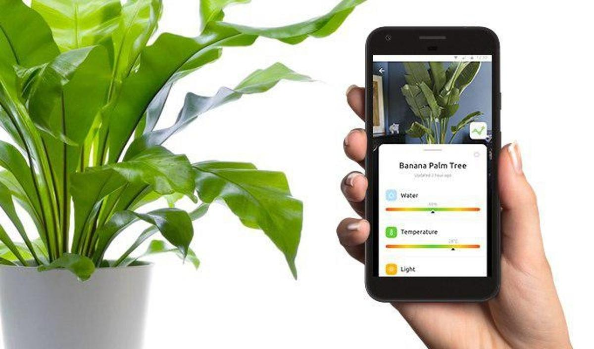 The team behind Greensens are running a Kickstarter campaign for its houseplant sensors