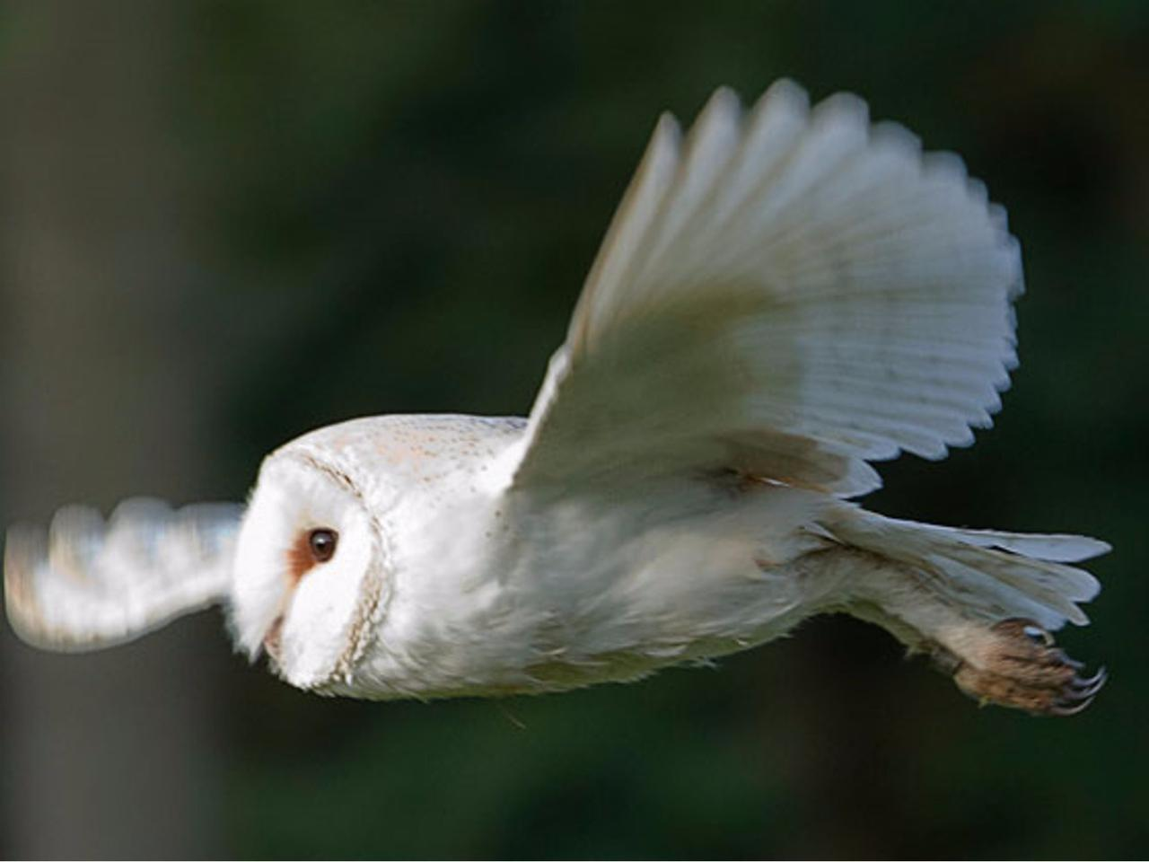 Owl wing structures could be the key to quieter air foils