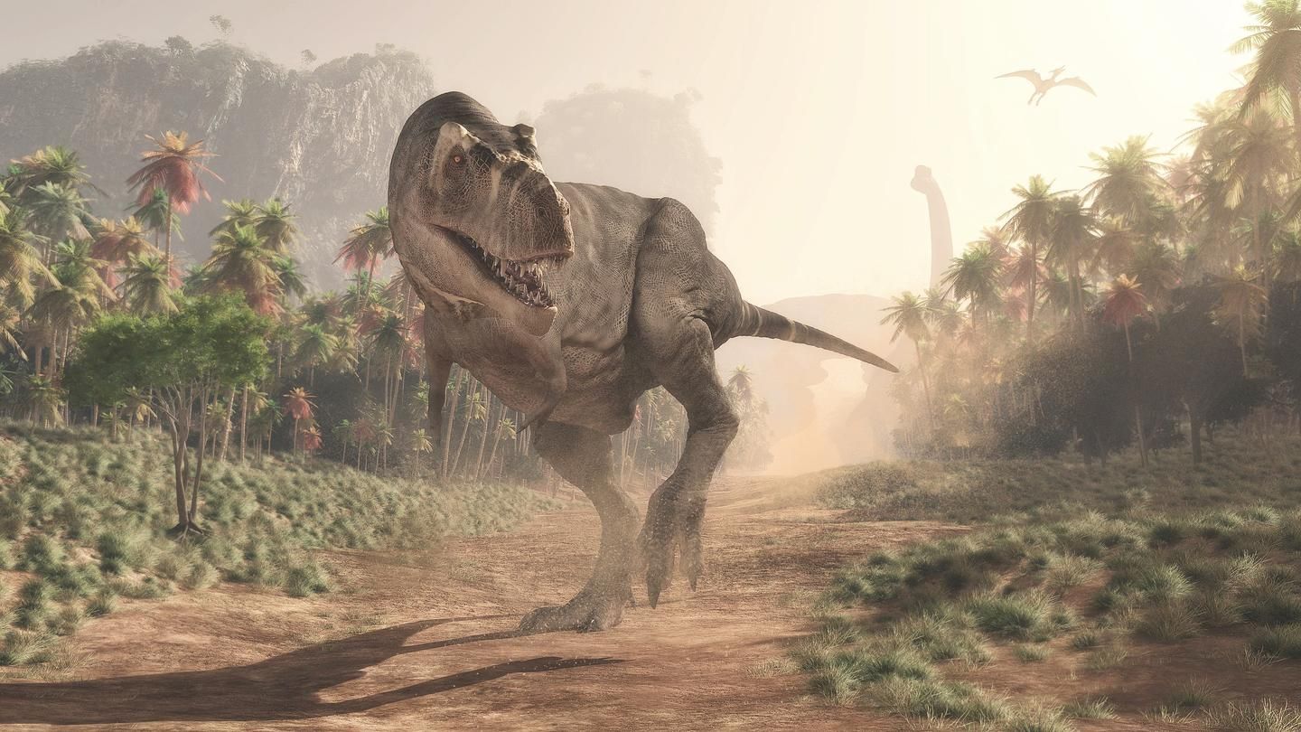 Tyrannosaurus rex likely placed a premium on being able to cover long distances with little effort