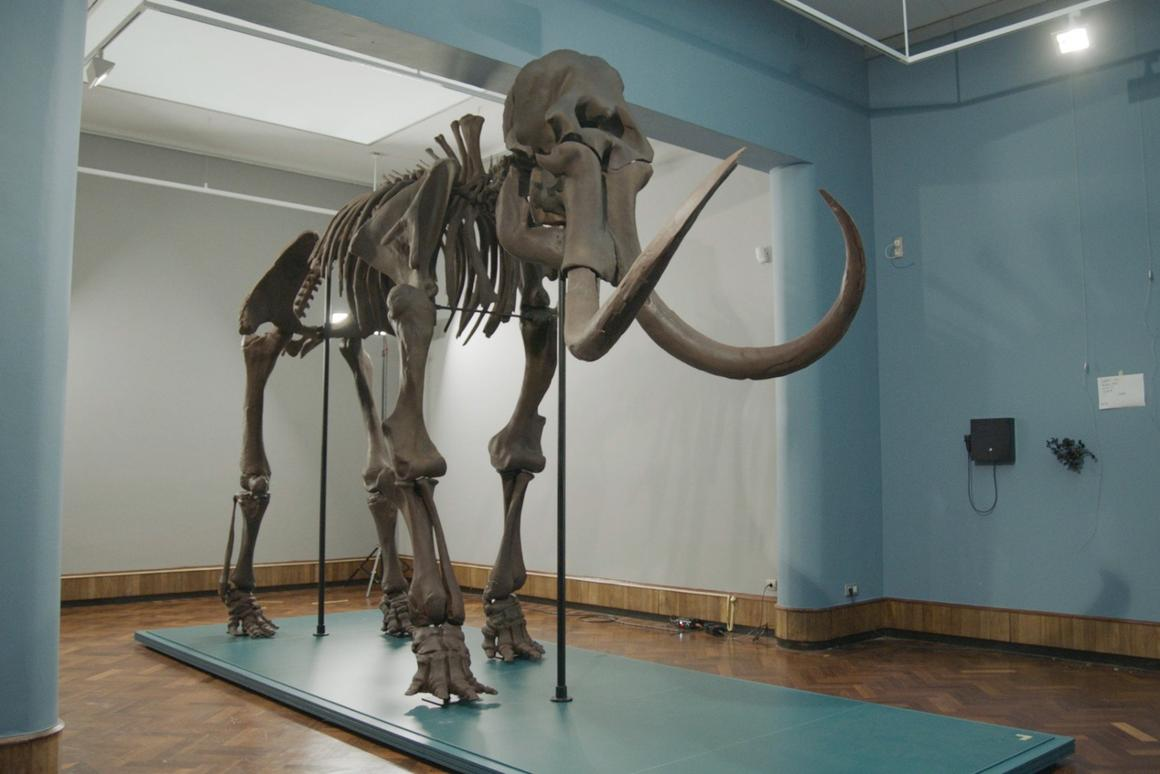 The fully-assembled Mammoth of Lier replica