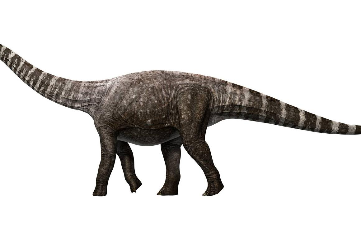An artist's rendition of Rhoetosaurus, which has now been found to have walked in a high-heeled fashion