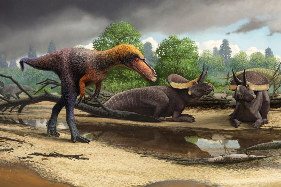 Artist's interpretation of the newly-namedSuskityrannus hazelae
