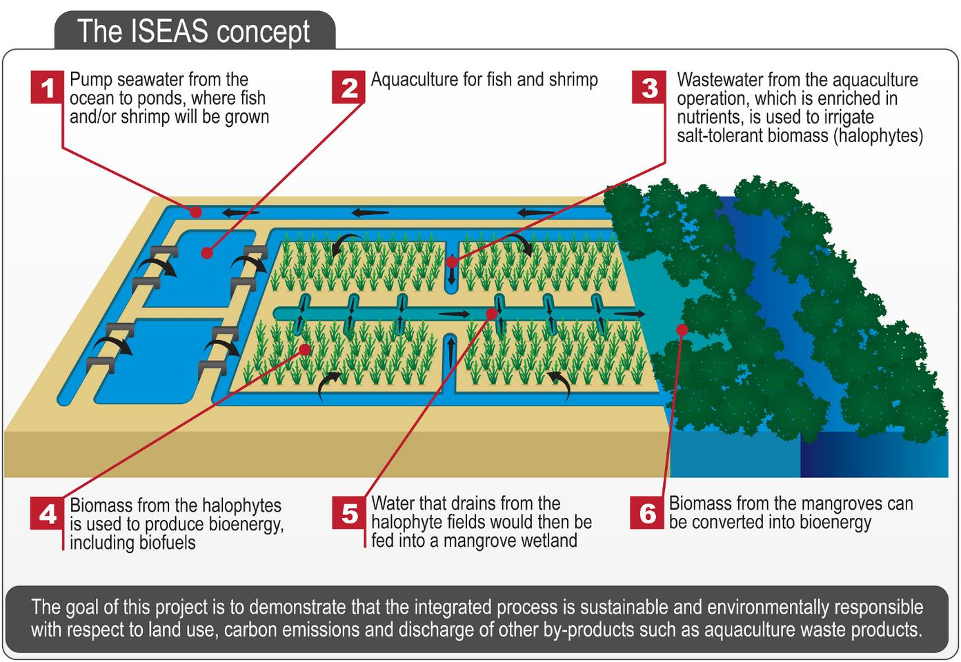 The pilot project that will test the potential of halophytes for biofuel production (Image: SBRC)