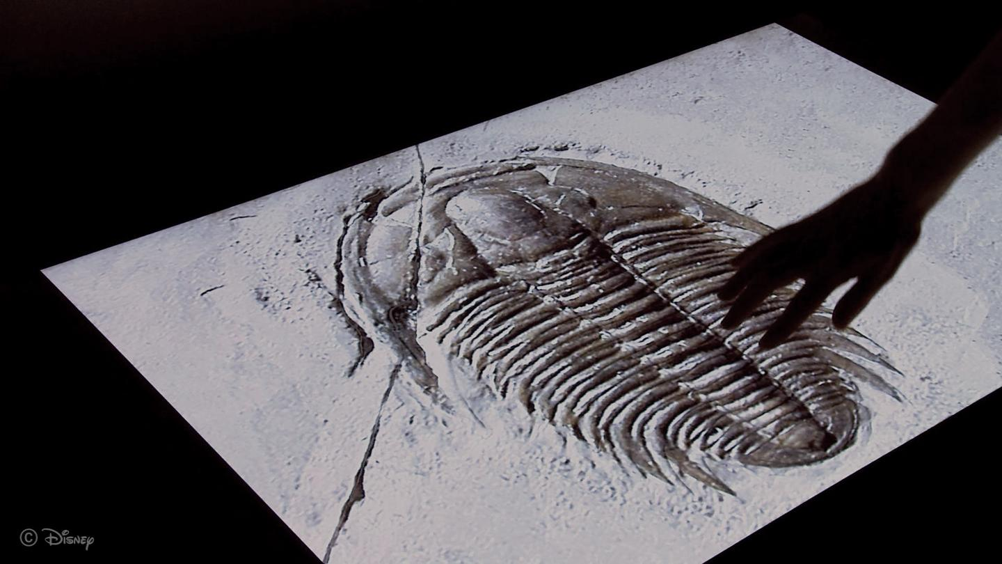 A user of Disney's new system is able to feel the ridges in a trilobite fossil, even though it's displayed on a completely flat screen