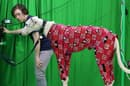 The researchers developed their new motion capture tech by first training it on a range of dogs wearing motion capture suits