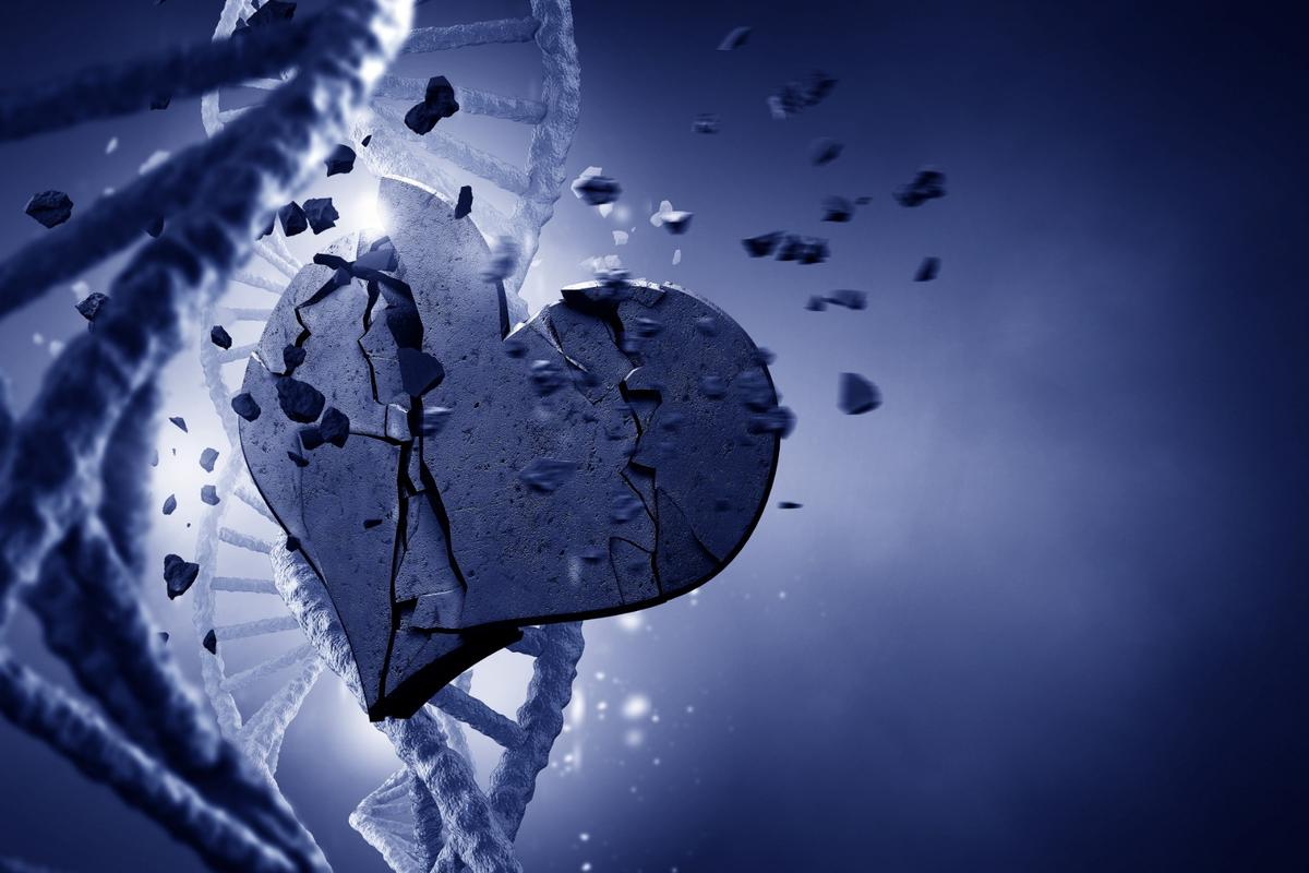 Researchers have traced our presdisposition to cardiovascular diseases back to a single gene mutation in an ancient human ancestor