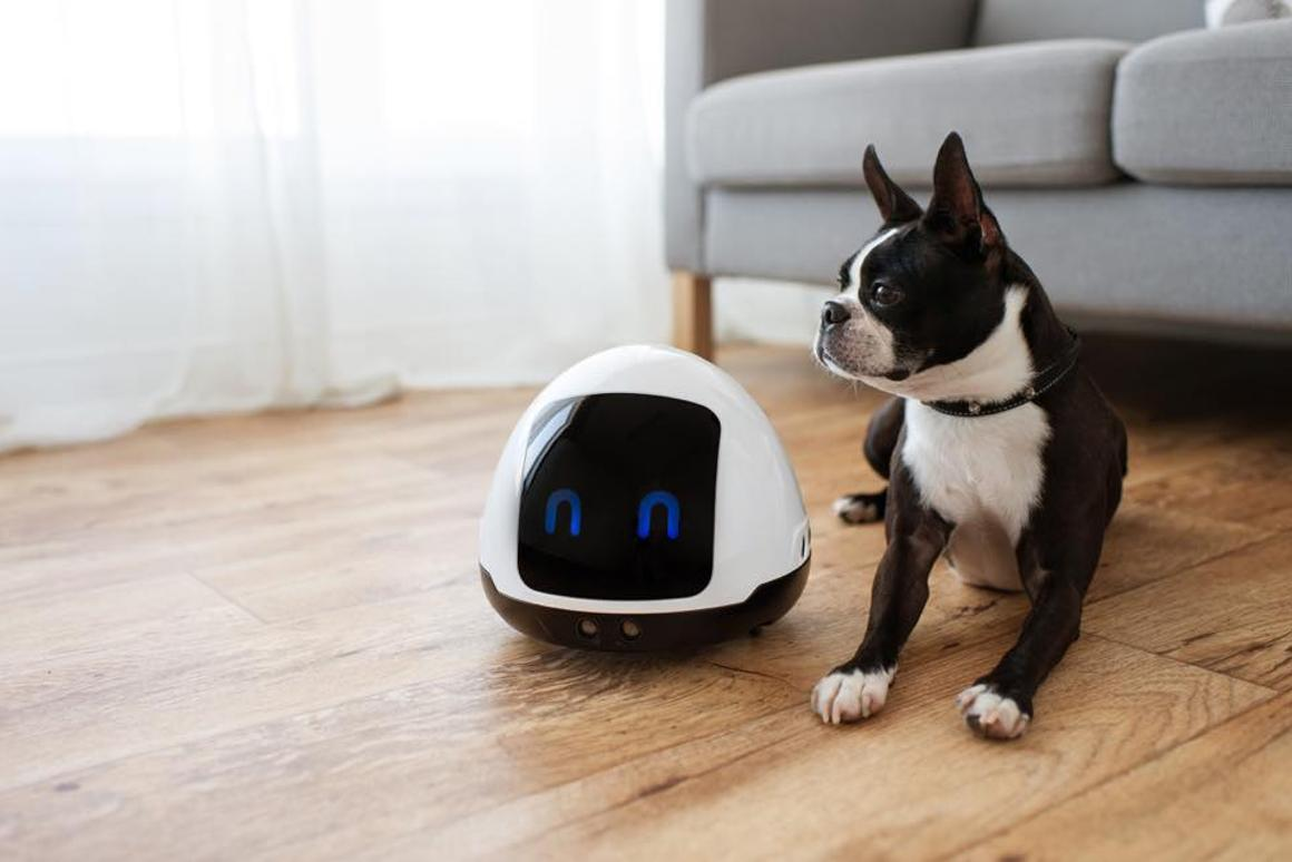 Pet-entertaining robot isn't stingy with the treats