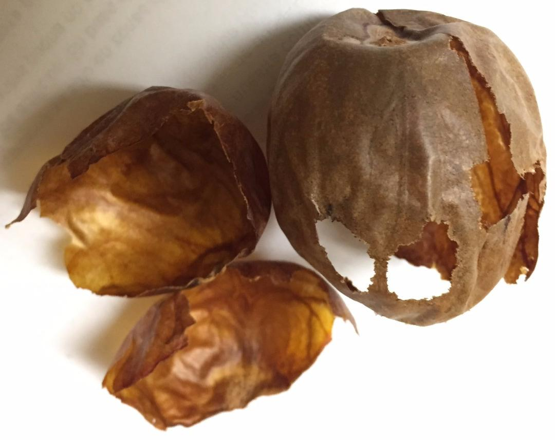 The team will begin investigating how thenatural compounds in avocado seed husks could lead to better medications