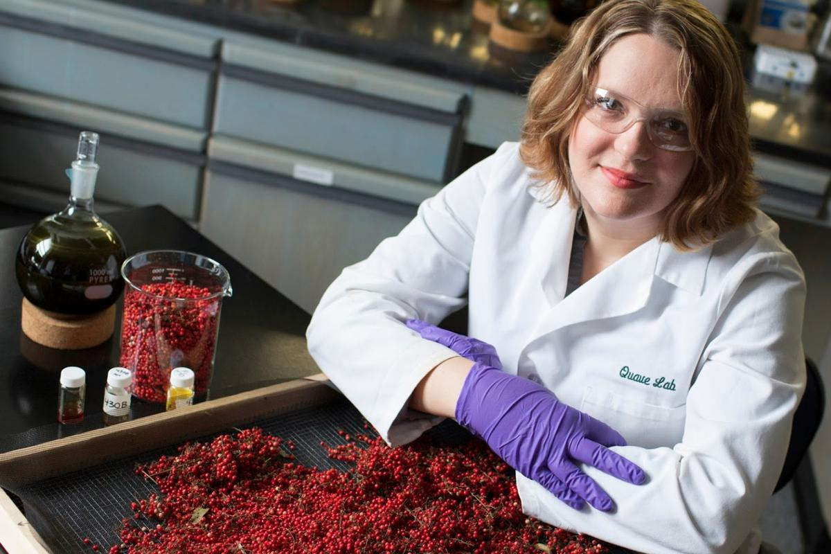 Ethnobotanist Cassandra Quave uncovered a medicinal mechanism in berries of the Brazilian peppertree