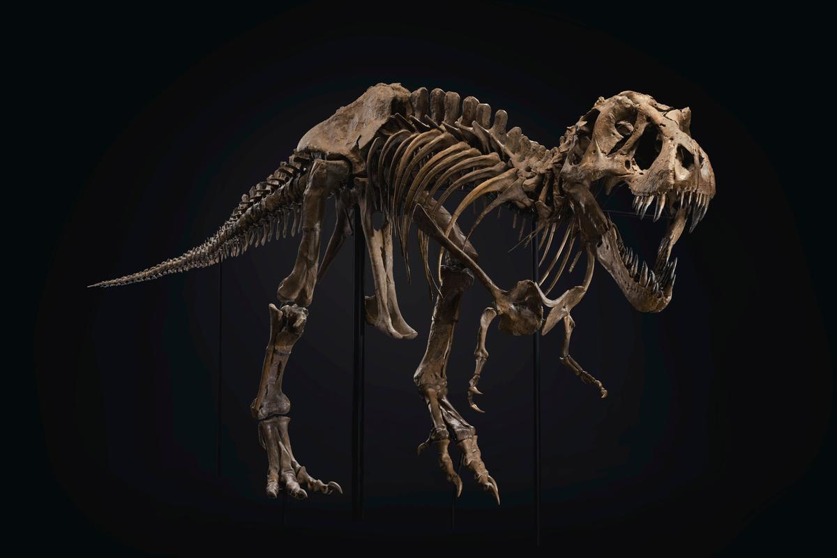 A huge Tyrannosaurus rex specimen nicknamed Stan has set a record price at auction