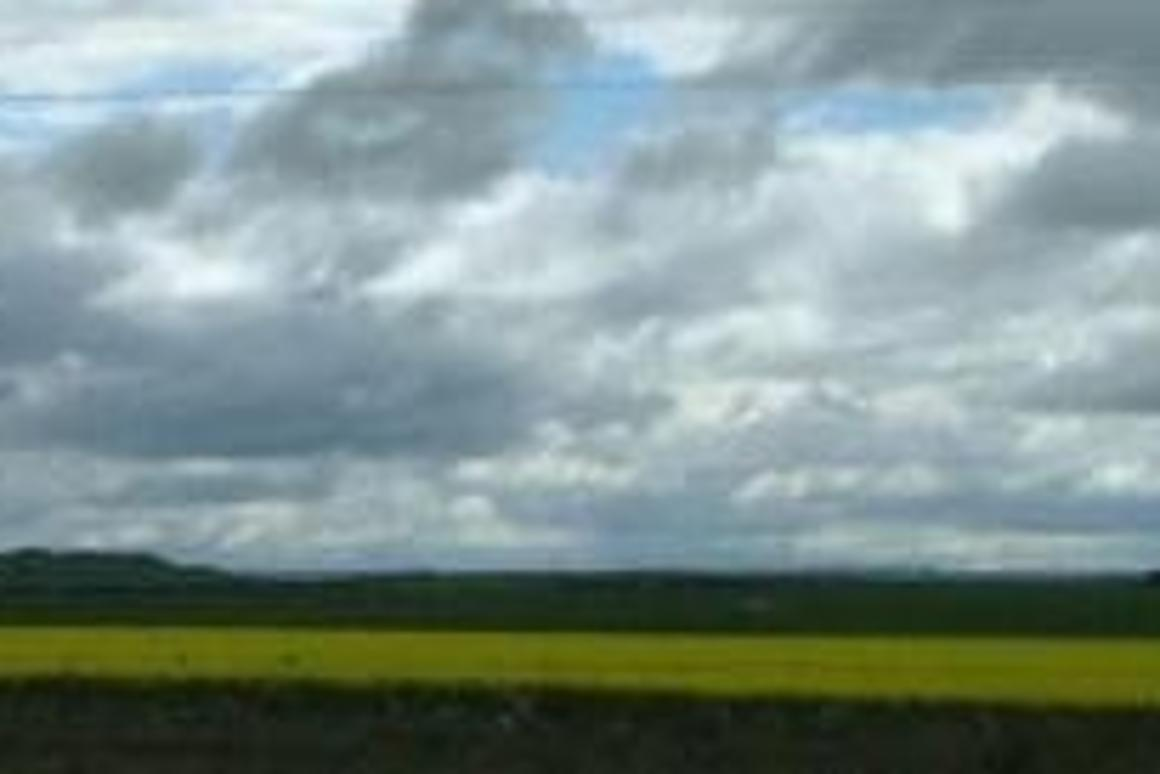Land clearing a concern for biofuel crops
