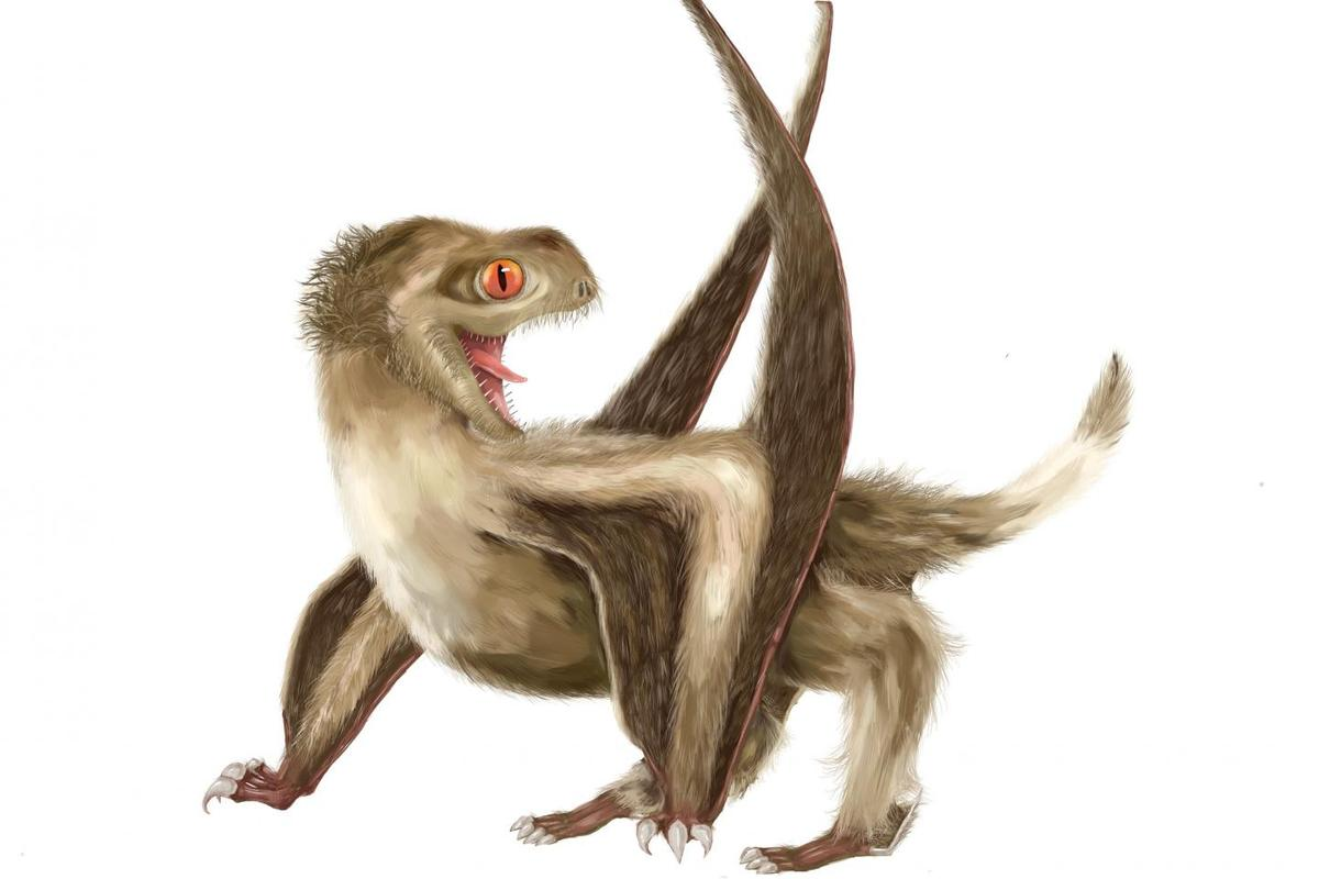 An artist's reconstruction of a feathered pterosaur