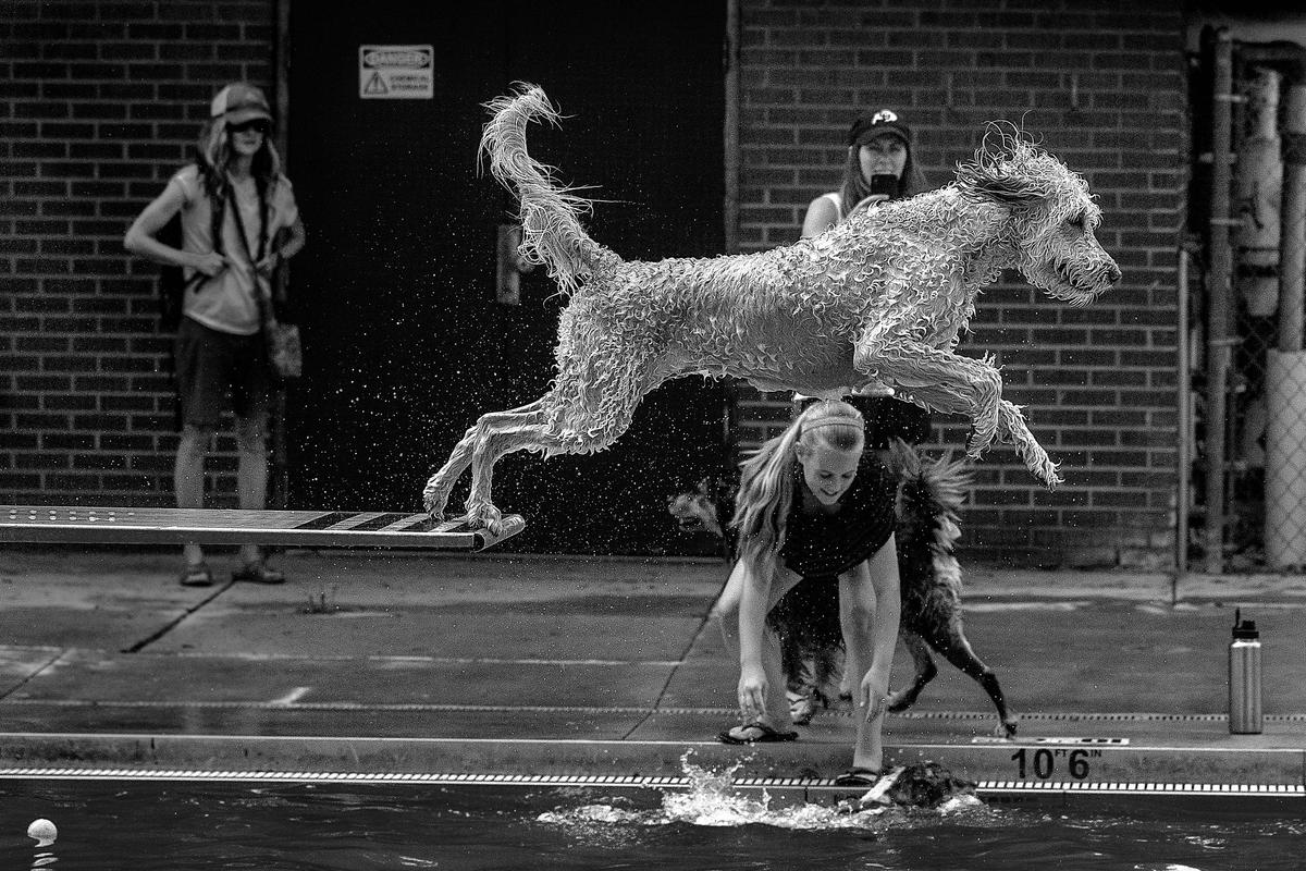 Shortlist, Motion, The Floating Point. A diving dog in an outdoor pool in Colorado, USA
