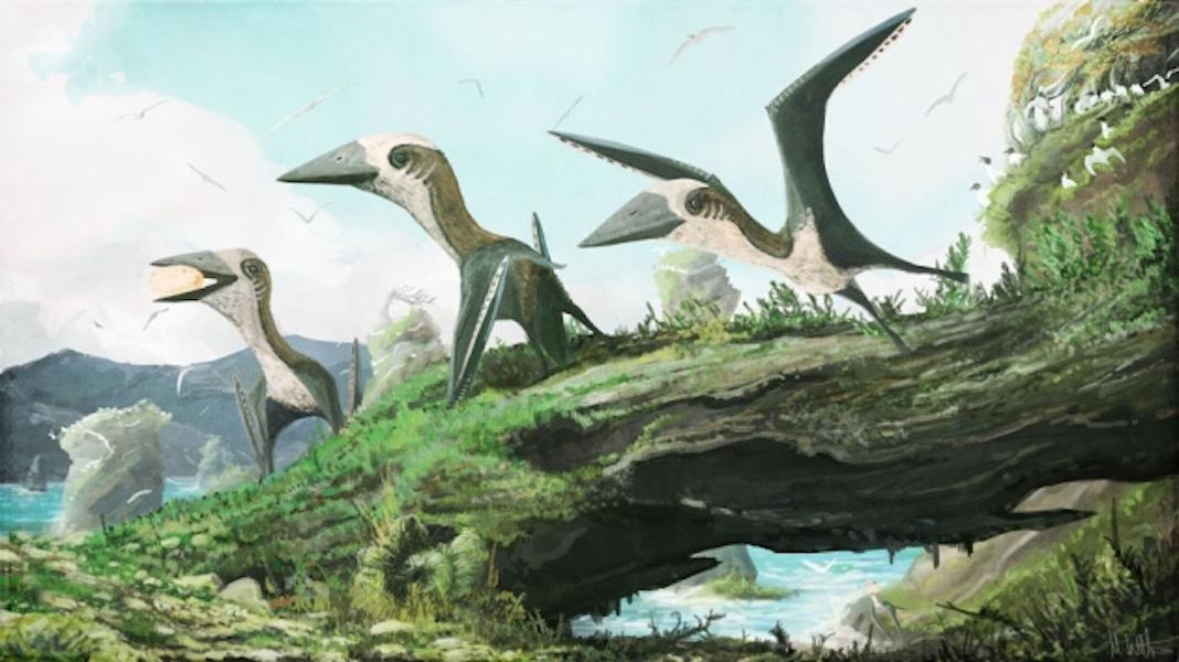 Tiny pterosaurs the size of a common house cat might have roamed the skies with their larger counterparts millions of years ago