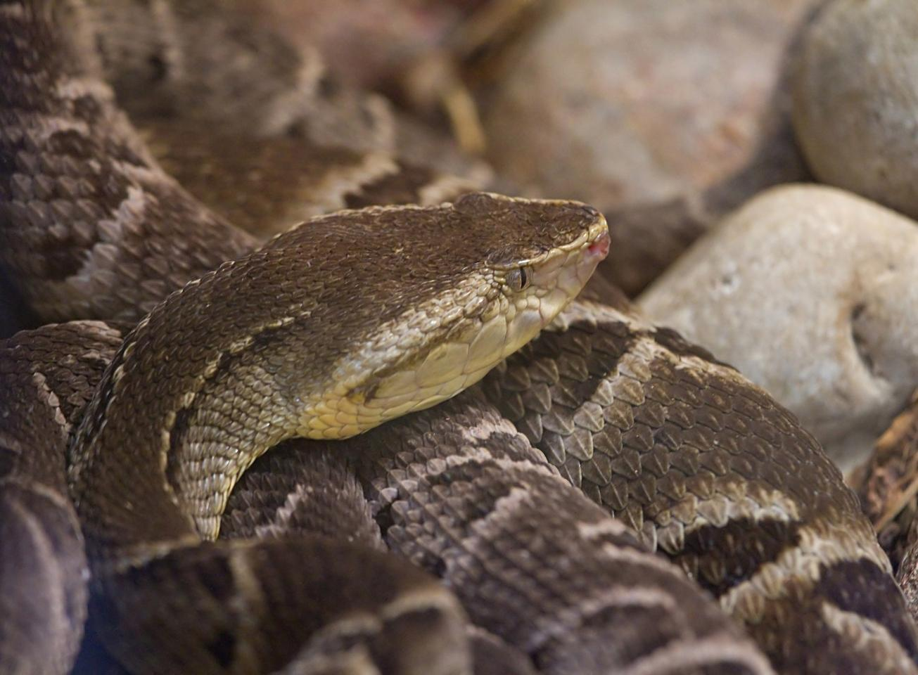 A new hydrogel inspired by the venom of a South American viper has been shown in the lab to stop bleeding within six seconds
