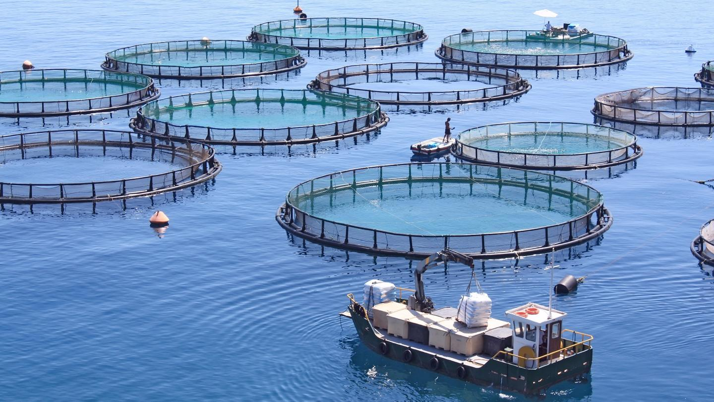 Ocean-farmed fish and seafood could meet global demand using only a tiny fraction of the world's oceans