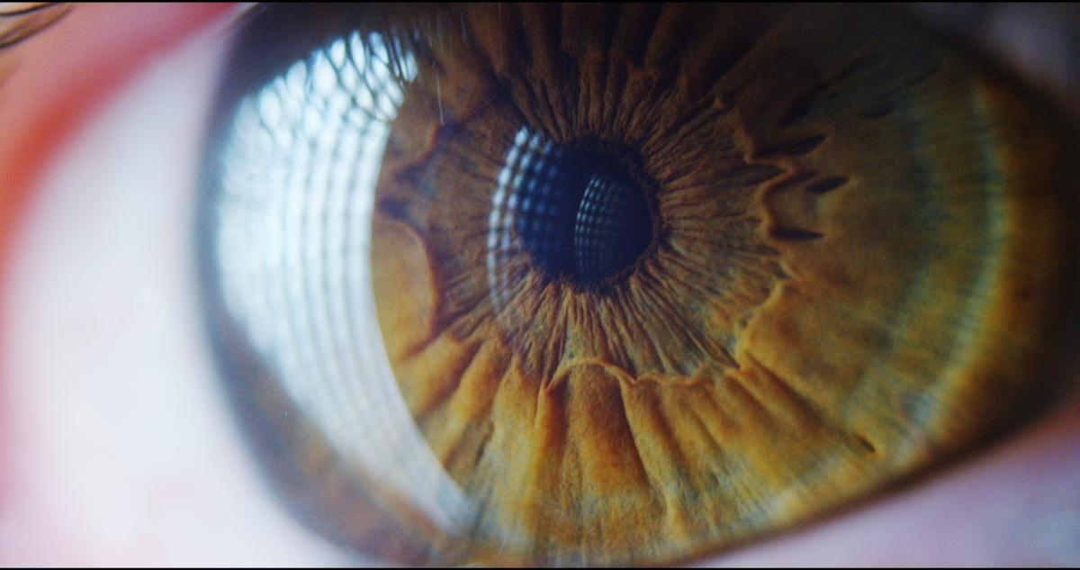 Stem cells could prove useful in restoring vision in human patients