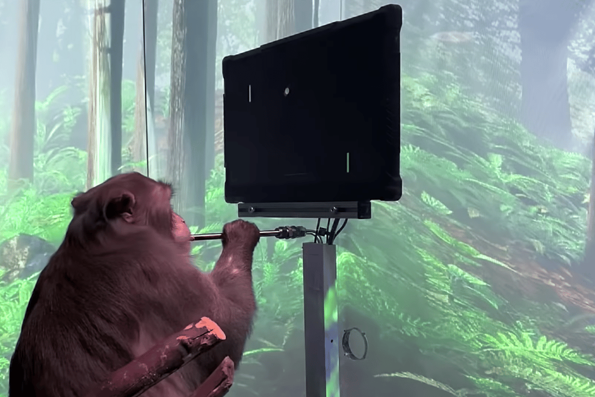 A monkey uses Neuralink's brain implant to play Pong with its mind
