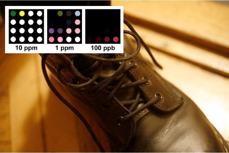The colorimetric sensor array (Shoe photo: Rama)